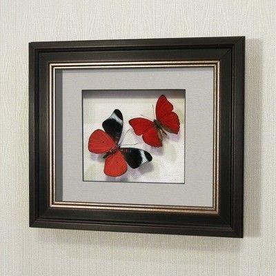 noname Бабочка Оживший цветок Панацеи и бабочка Летающий самоцвет (169в) - фото 1