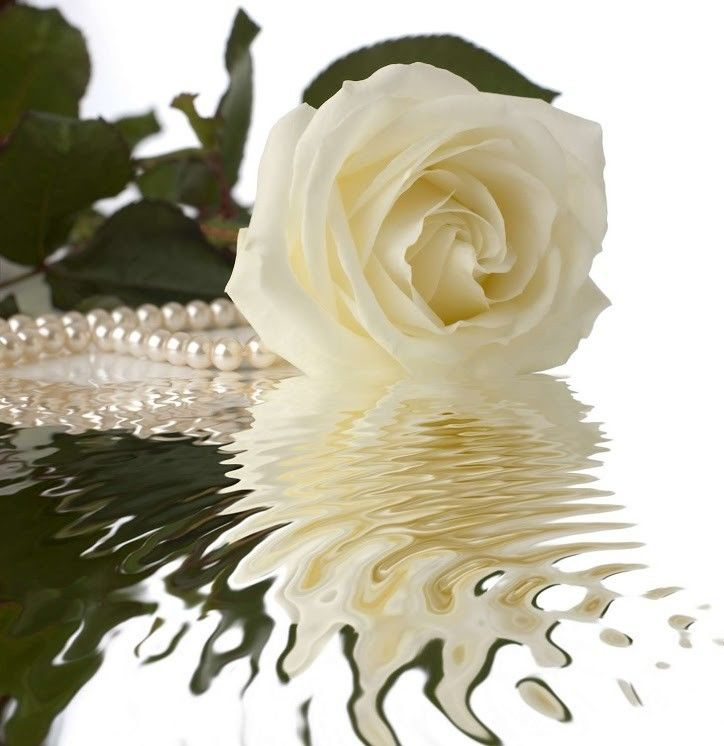 Фотообои Vimala Роза с жемчугом - фото 1