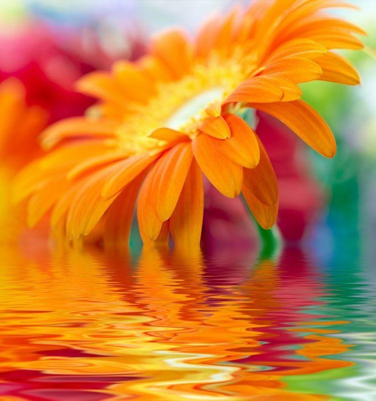 Оранжевые картинки