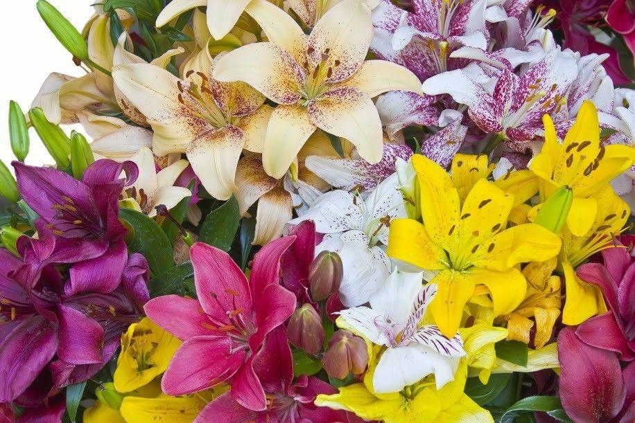 Надписью благодарю, лилии букеты картинки красивые