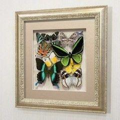 noname Сборка с зелеными доминирующими бабочками (92с-02)