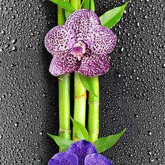 Панели ПВХ Панели ПВХ Декопласт Орхидея 1