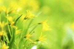 Фотообои Фотообои Vimala Весенние цветы