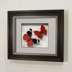 noname Бабочка Оживший цветок Панацеи и бабочка Летающий самоцвет (169в)
