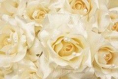 Фотообои Фотообои Vimala Розы и жемчуг