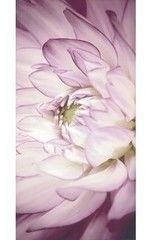 Плитка Плитка Ceramika Paradyz Sorenta Bianco inserto kwiaty B 30x60