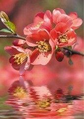 Фотообои Фотообои Vimala Цветок и отражение