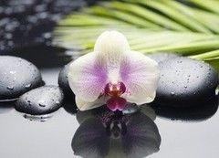Плитка Плитка Березакерамика Азалия Орхидея 2 25х35