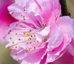 Фотообои Фотообои Vimala Букет вишни