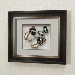 noname Бабочки Жемчужница Шренка и голубянка Данис (170в)
