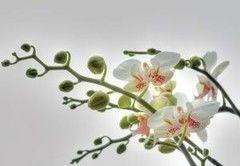 Фотообои Фотообои Komar Orchidee 1-608