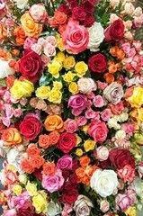 Фотообои Фотообои Vimala Красочные розы