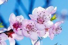 Фотообои Фотообои Vimala Цветки