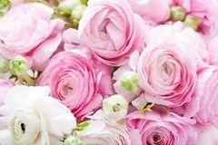 Фотообои Фотообои Vimala Аромат роз