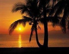 Фотообои Фотообои Komar Palmy Beach Sunrise 8-255
