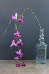 Orlix Орхидея 06-081-O