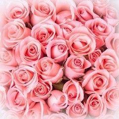 Фотообои Фотообои Vimala Букет роз
