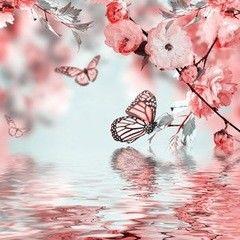 Фотообои Фотообои Vimala Полёт бабочки