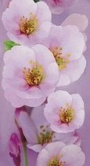 Панели ПВХ Панели ПВХ Ю-пласт Цветы
