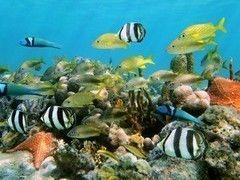 Фотообои Фотообои Vimala Тропические рыбы