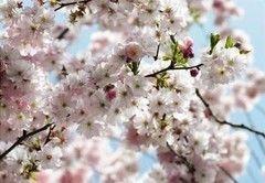 Фотообои Фотообои Komar Spring 8-507