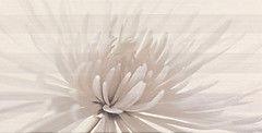 Плитка Плитка Opoczno Avangarde inserto flower 29.7x60 O-AVA-WIE301