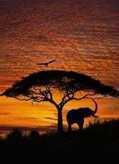 Фотообои Фотообои Komar African Sunset 4-501