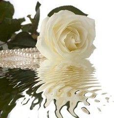 Фотообои Фотообои Vimala Роза с жемчугом