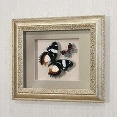 noname Бабочки Французский триколор и Летающий самоцвет (176с)