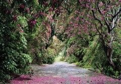 Фотообои Фотообои Komar Wicklow Park 8-985