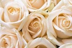 Фотообои Фотообои Vimala Просто розы